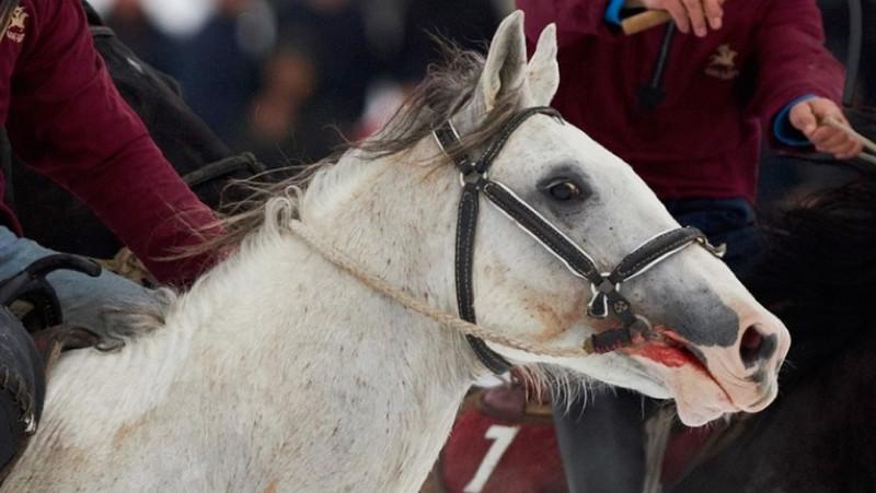 Следователи в Москве проверят киргизских козлодеров на живодерство