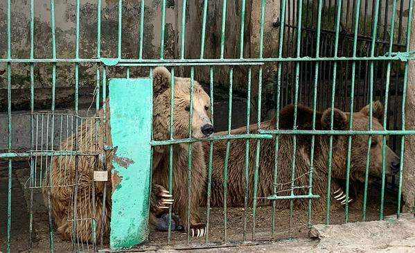 Пожизненное для медведя